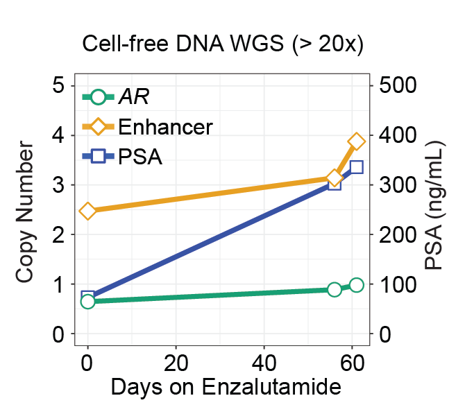 AR gene and enhancer copy number tracks with PSA.
